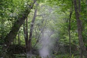 新緑の森の中に煙が・・・