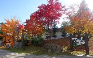 今年の紅葉は赤と黄色♪