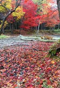 阿寒湖光の森紅葉