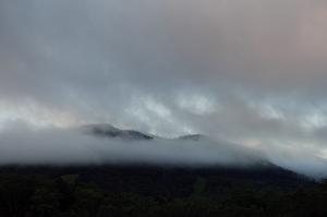 朝景の阿寒の森