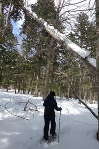 冬を探しに阿寒湖光の森へ