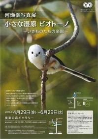 奏楽の森ギャラリーで野鳥写真展