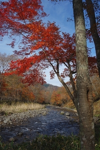 紅葉の阿寒川を歩く