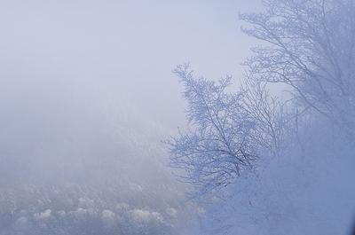 ボッケの霧氷