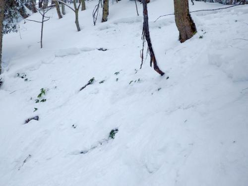 雪のちから