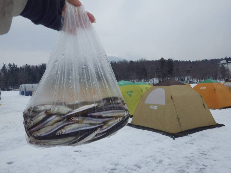 阿寒湖ワカサギ釣り(レンタル穴釣り)