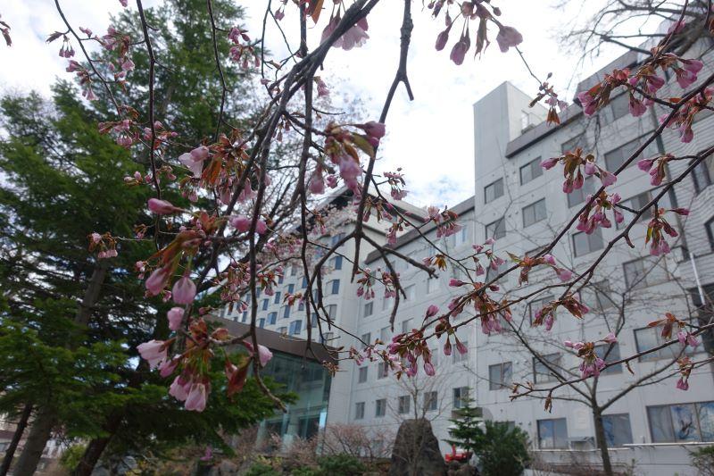 ニュー阿寒ホテル エゾヤマザクラ